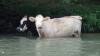 20_grimes_cows-385ef5e02643f692b7c7b7266c4d2f5aa36a1f58